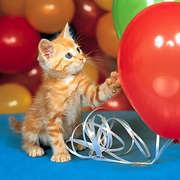 Рыжий котенок (киска Алиска)ищет любящего хозяина.Отдам в хорошие руки