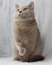 Вязка кота