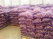Картофель свежий оптом со склада