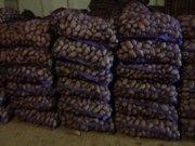 Реализуем картофель оптом урожай 2016.