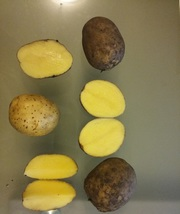 Картофель мелким оптом от 100 кг с Доставкой в Перми